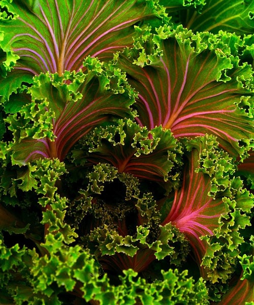 Cooking Kale: Adding it to a Soup