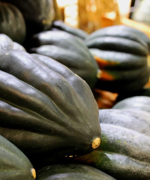 5 Great Ways That You Can Eat Acorn Squash This Fall